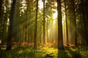 Phân tích tác phẩm rừng xà nu nguyễn trung thành