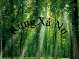 phân tích hình tượng cây xà nu trong truyện ngắn rừng xà nu