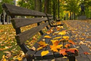 Cảm nhận về tác phẩm mùa lá rụng trong vườn