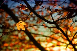 Phân tích cuộc gặp gỡ của chị Hoài với mọi người trong truyện Mùa lá rụng trong vườn