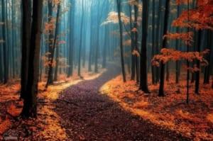 Ý nghĩa hình ảnh con đường mòn trong truyện Thuốc