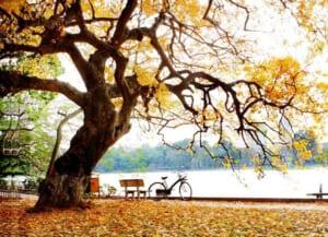 Phân tích khổ cuối bài thơ đây mùa thu tới của Xuân Diệu