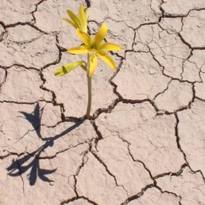 Giữa một vùng sỏi đá khô cằn cây hoa dại vẫn mọc lên và nở những chùm hoa thật đẹp