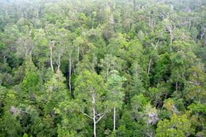 Phân tích hình tượng rừng xà nu